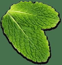 ristorante riviera foglie menta